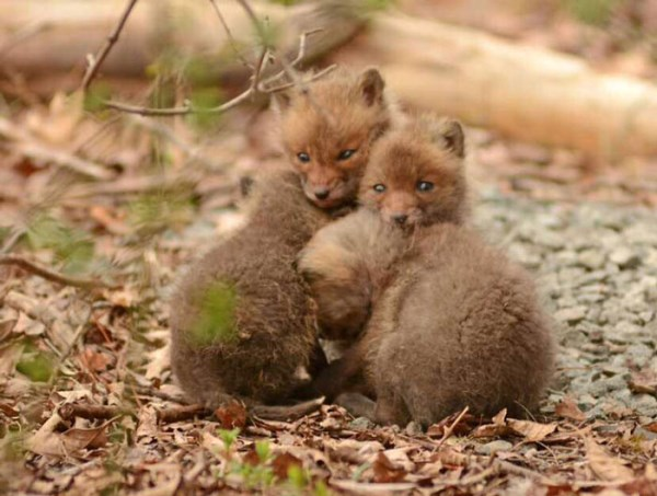 Father And Daughter Find Baby Foxes In Their Backyard_15