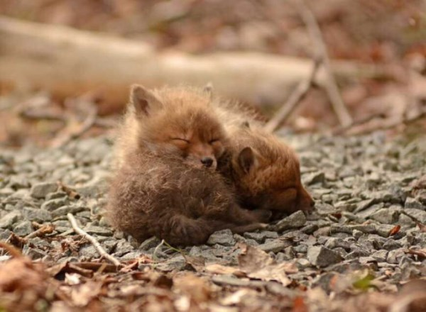 Father And Daughter Find Baby Foxes In Their Backyard_3