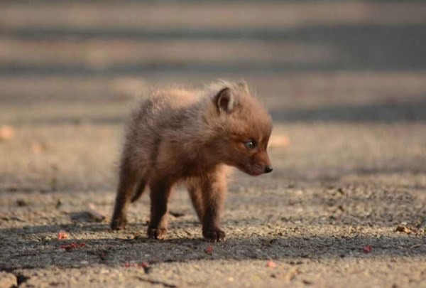 Father And Daughter Find Baby Foxes In Their Backyard_8