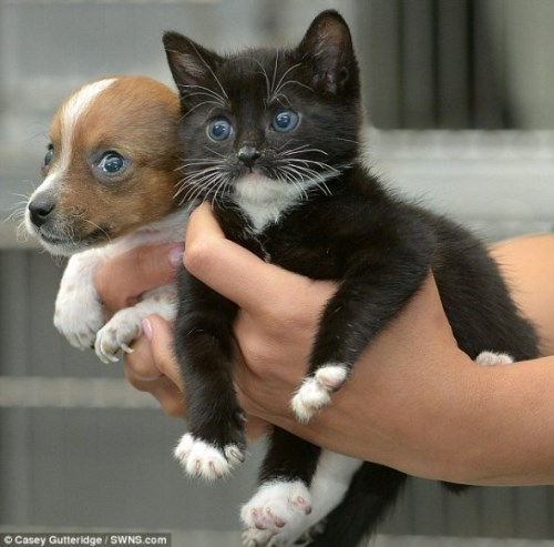 Pup and Kitten Think They Are Related
