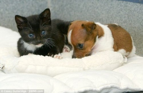 Pup and Kitten Think They Are Related_10