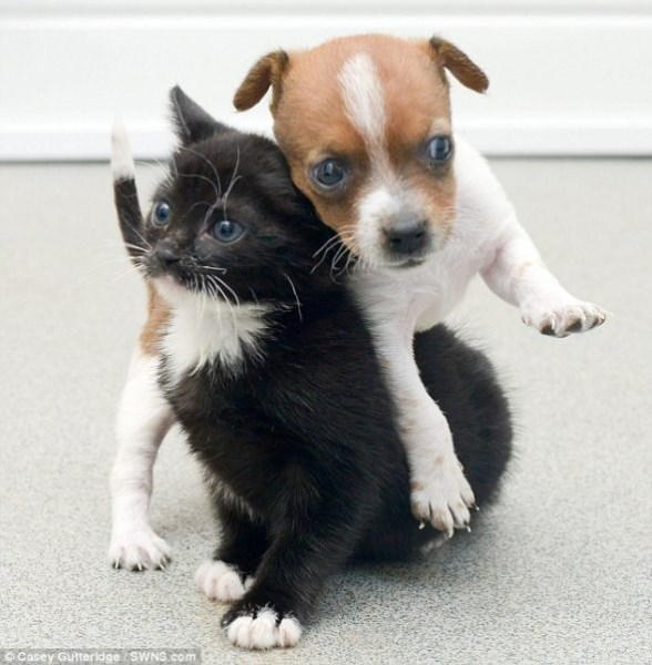 Pup and Kitten Think They Are Related_2