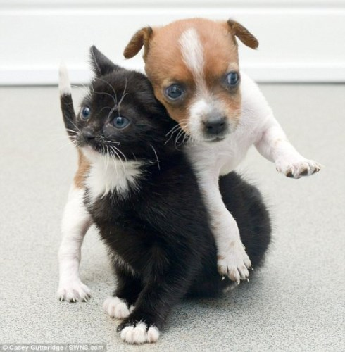 Pup and Kitten Think They Are Related_2_renamed_2238