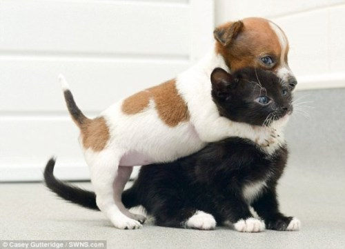 Pup and Kitten Think They Are Related_3