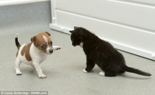 Pup and Kitten Think They Are Related_5