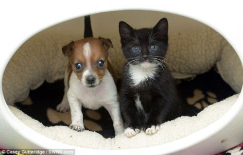 Pup and Kitten Think They Are Related_6