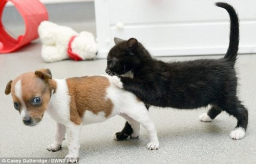 Pup and Kitten Think They Are Related_8