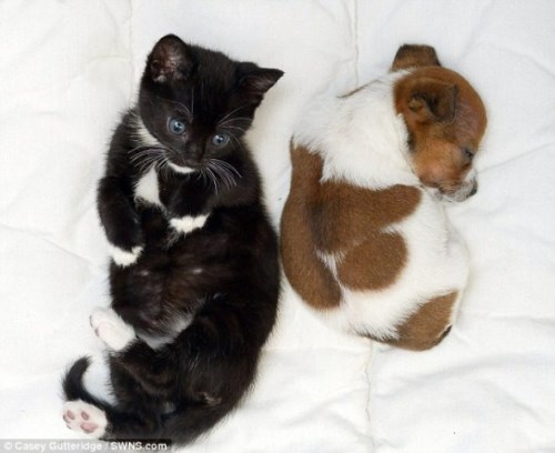 Pup and Kitten Think They Are Related_9